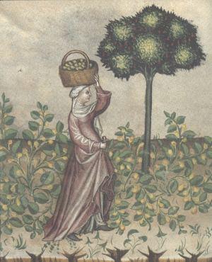 obálka publikace Zahrada slov